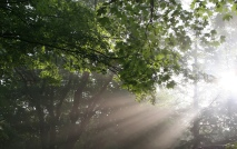god-rays-online