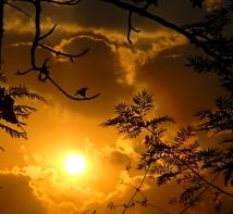 petunia in sunlight - online