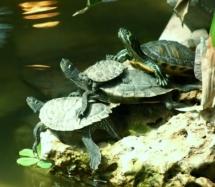 turtles - online