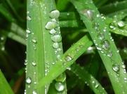 Dew drops online