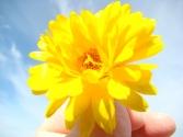 Yellow flower - online
