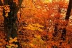 tree-leaves-online
