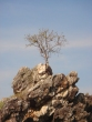 tree-on-rock-online