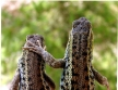 Lizard Buddies