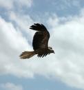 eagle-online
