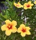 Souza flower 4