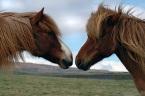 horses - online