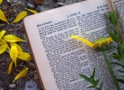 Bible and flower - online