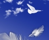 Dove and feather