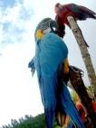macaws-online.jpg