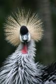exotic bird-online